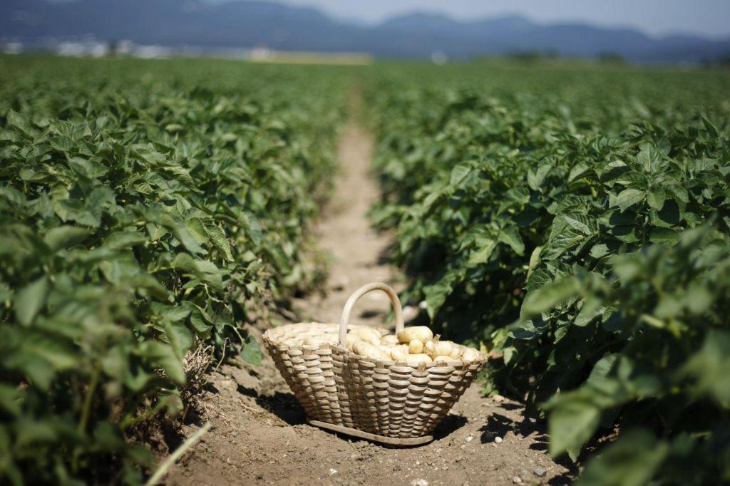 Subvencije od živinoreje k rastlinski pridelavi