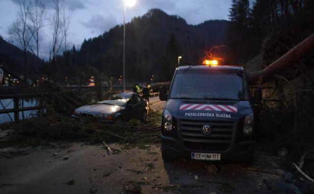 Pri Podvelki je veter izruval večje drevo, ki je padlo na osebno vozilo 52-letnega voznika, domačina, ki je vozil iz smeri Dravograda proti Mariboru. FOTO: PU Celje