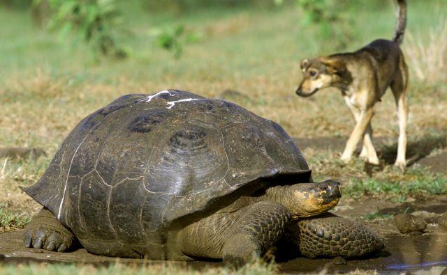 Čeprav še danes ne vemo, ali na Zemlji živi deset ali petdeset milijonov živalskih in rastlinskih vrst – popisanih je manj kot dva milijona–, vsako leto pa jih »odkrijejo« deset tisoč, večine nikoli ne bomo spoznali. Prej bodo izumrle. FOTO: Guillermo Granja Reuters