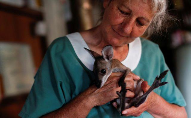 Reševanje malega kenguruja. FOTO: Jorge Silva/ Reuters