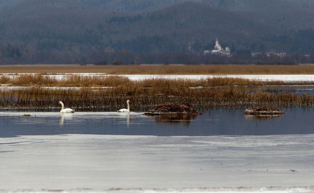 Ko je Cerkniško jezero polno, je največje jezero pri nas. FoOTO: Igor Modic