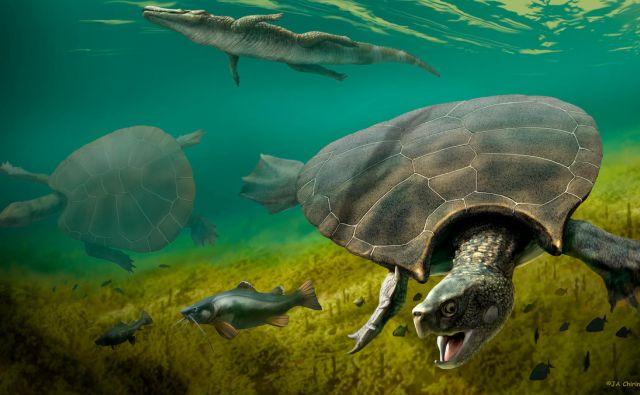 Na ilustraciji je prikazana ogromna izumrla sladkovodna želva <em>Stupendemys geographicus</em>, ki je v dobi miocena živela v jezerih in rekah na severnem območju današnje Južne Amerike. FOTO: J.a. Chirinos/Reuters