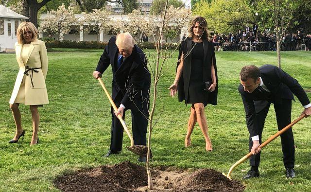 Donald Trump misli, da bo sajenje dreves ustavilo podnebne spremembe. FOTO: Marcelo Teixeira/Reuters