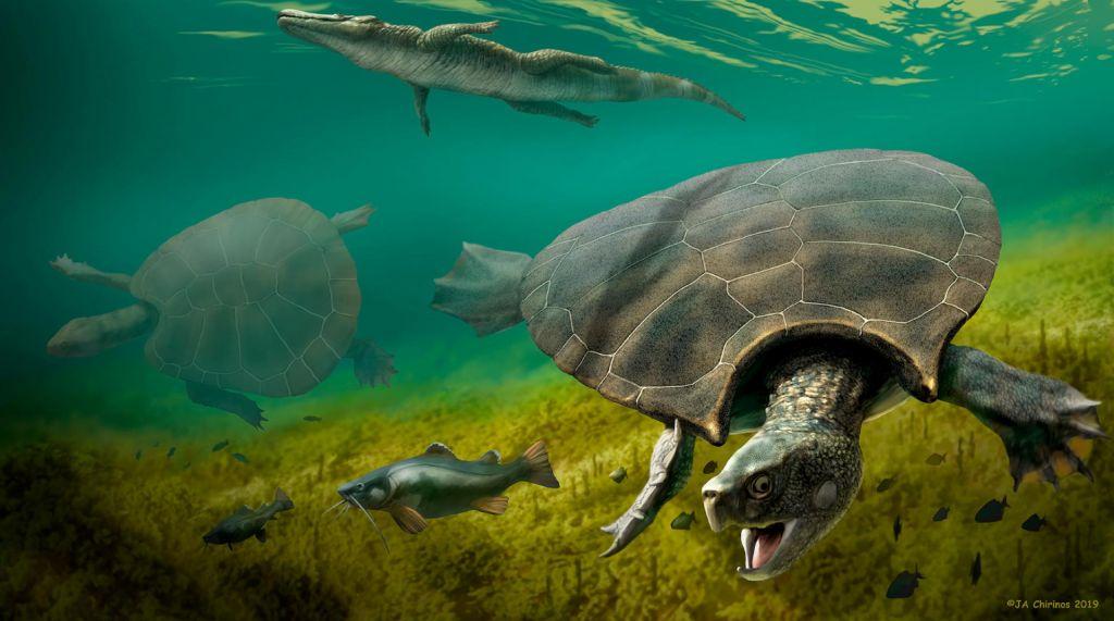 Odkrili fosil kot avtomobil velike želve