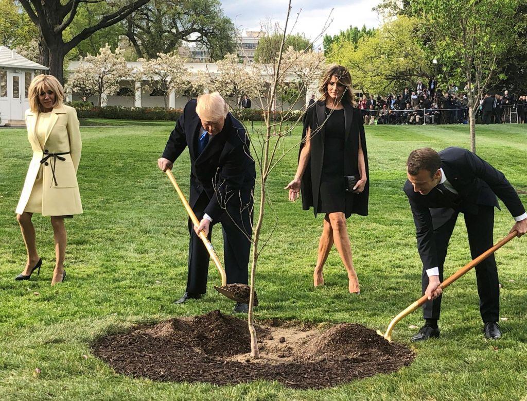 FOTO:Donald Trump s pogozdovanjem nad podnebne spremembe