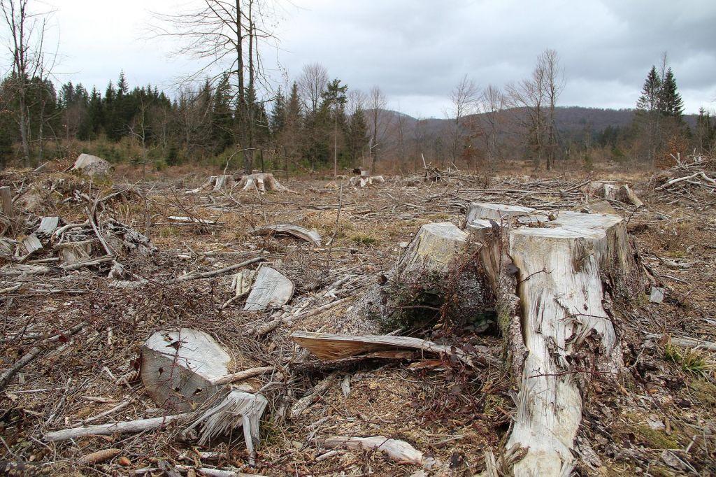 Lubadar in ujme lani uničile 2,4 milijona kubikov lesa