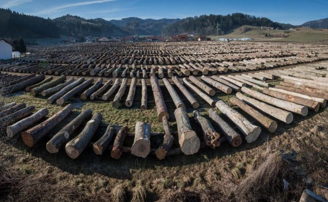 Najkvalitetnejši les so kupili kupci iz Nemčije in Italije, največ lesa pa Kitajci. FOTO: Zavod za gozdove Slovenije