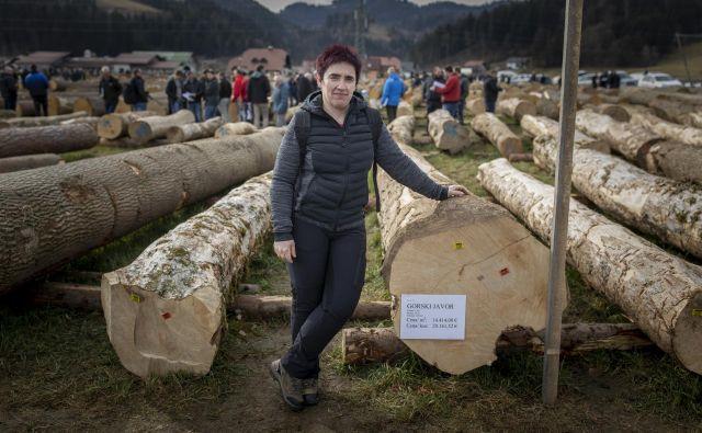 Zmagovalca dražbe je na Koroško pripeljala Helena Jaksetič, zrasel pa je v snežniških gozdovih. FOTO: Voranc Vogel/Delo