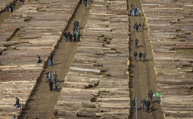 Najkvalitetnejši les so kupili kupci iz Nemčije in Italije, največ lesa pa Kitajci. FOTO: Voranc Vogel/Delo