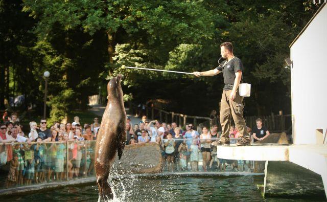 Inšpekcija bi dopustila zadrževanje prostoživečih živali in njihovo gojitev le za programe ohranjanja vrst, prikazovanje teh živali v živalskih vrtovih pa z namenom ozaveščanja javnosti. Živalski vrt Ljubljana ima okrog 305.000 obiskovalcev na leto, četrtina se jih udeleži vsaj kakšnega od pedagoških programov. Sodelujejo s člani evropske in svetovne zveze živalskih vrtov, v Sloveniji tudi z živalskim vrtom Sikalu. FOTO: Jure Eržen/Delo
