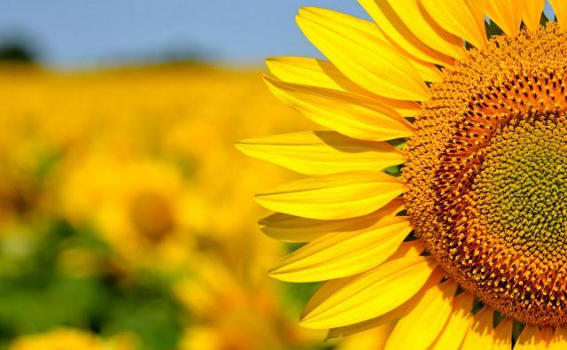 S tem, ko drugemu odpustimo njegovo napako, osvobodimo tudi sebe. FOTO: Shutterstock