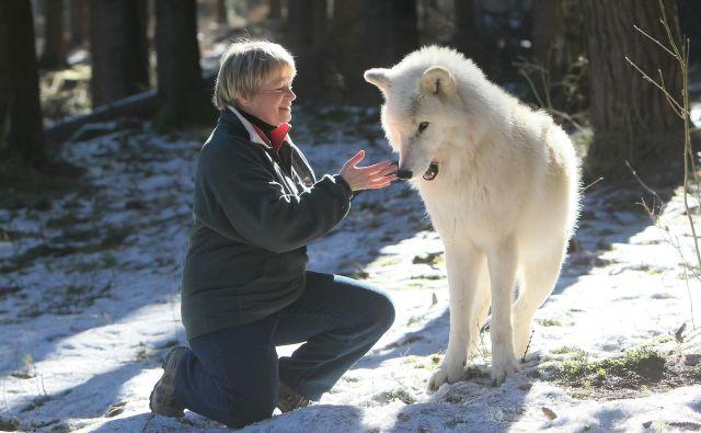 S spoznavanjem in opazovanjem volkov se je porodila želja, da bi jih ljudje bolje spoznali in uvideli, da smo si bolj podobni, kot si hočemo priznati. Foto Tanja Askani