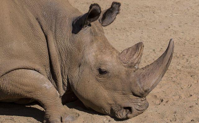 Nekdanji nosorogi so bili podobni današnjim, ko mnogim vrstam grozi izgon iz tega raja. FOTO: Reuters