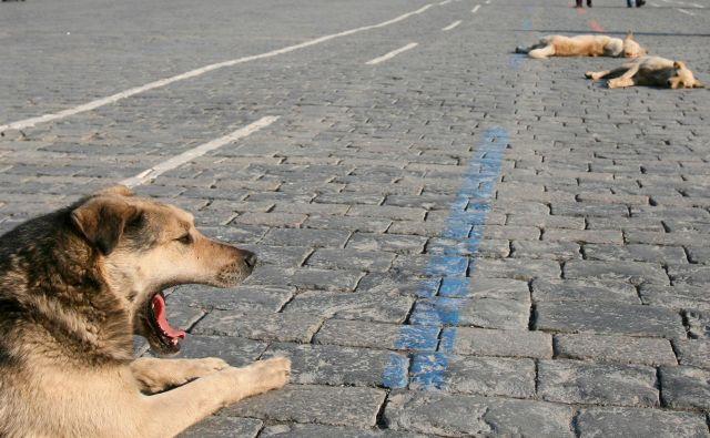 V Moskvi v strahu pred širjenjem koronavirusa pobijajo potepuške pse. Svetovna zdravstevna organizicaija opozarja, da dokazov, da bi psi lahko širili virus, ni. FOTO: Denis Sinyakov/Reuters
