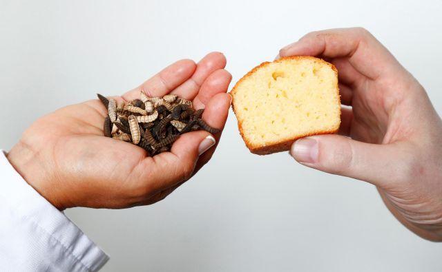 Glede na opažanja znanstvenikov potrošniki ne opazijo razlike, če je četrtina živalskega masla nadomeščena z maslom ličink. Razliko v okusu opazijo, šele ko pride do polovičnega razmerja. FOTO: Francois Lenoir/Reuters