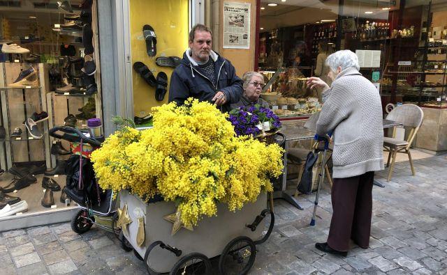 Medtem ko je pri nas na ulicah v rokah žensk še vedno videti rdeče nageljne, ki veljajo za nekakšen simbol delavskega razreda, je v Italiji ta cvet mimoza. FOTO: Mimi Podkrižnik