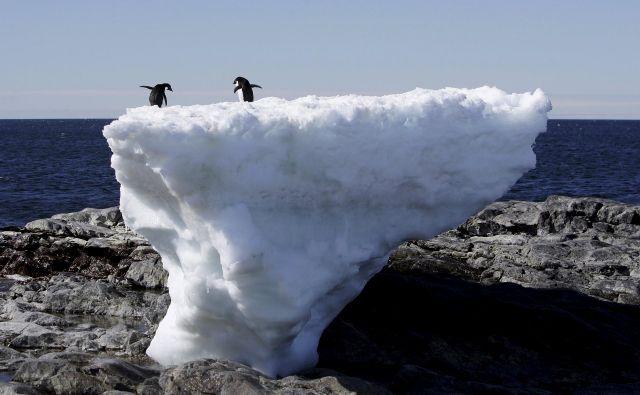 Adelijski pingvini na Antarktiki se zaradi taljenja ledu soočajo s spremenjenimi življenjskimi razmerami. FOTO: Pauline Askin/Reuters