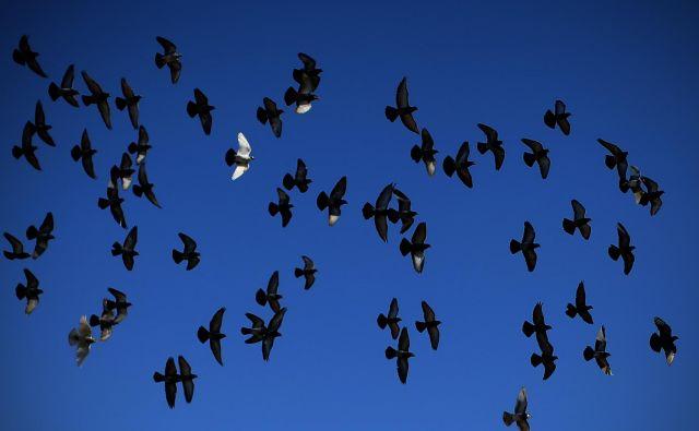 Gledam modro nebo … jasno je in brez oblačka … in brez sledi letal. V zadnjih desetletjih smo ljudje s svojo eksponentno rastjo onesnaževanja resno ogrozili svoj planet. FOTO: Jure Eržen/Delo