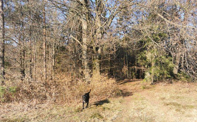 Potka v gozd in Nodi. FOTO: Saša Senica <div> <div></div> </div>