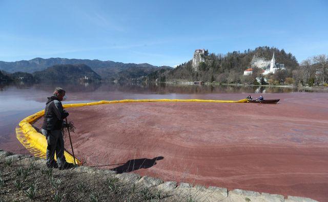 Podoba cvetočega blejskega jezera. FOTO: Dejan Javornik/Slovenske novice <div> <div></div> </div>