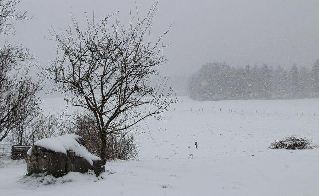 Zasnežena kočevska pokrajina danes zjutraj. FOTO: Simona Fajfar