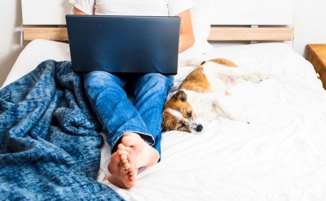 Kje pa vi delate v teh dneh? Morda kar v postelji v družbi domačih ljubljenčkov? FOTO: Shutterstock