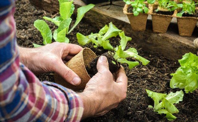 Vrtičkarji se že pripravljajo na poletno in jesensko samooskrbo, na katero bomo letos zagotovo gledali drugače. Foto Shutterstock