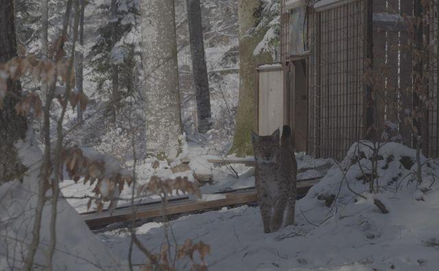 Katalin pred oboro na Snežniku. FOTO: Kawka/Life Lynx