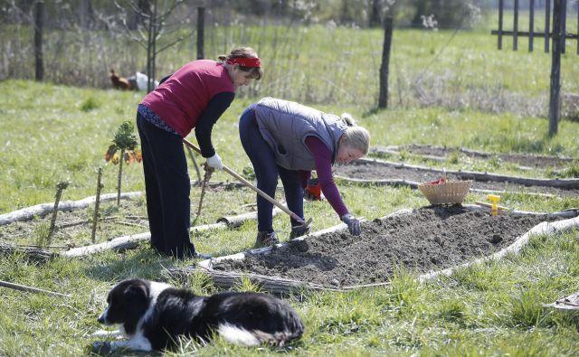 Vrtnarjenje je zagotovo primeren način porabe časa za ljudi, ki so v glavnem doma. FOTO: Leon Vidic/Delo