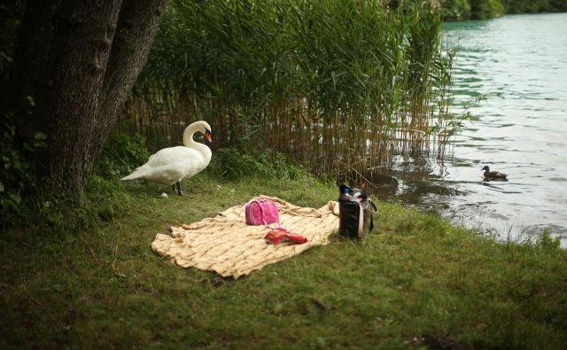 Velika večina najbolj nežnih romanov se dogaja v idiličnem poletju. Foto Jure Eržen