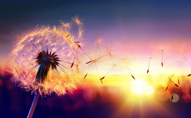 Živimo v času univerzalizirane oslovskosti. Foto Shutterstock