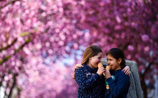 Devetletna Lilly in Esther se sladkata s sladoledom pod cvetočim češnjevim drevesom v ulici Heerstrasse v Bonnu, na zahodu Nemčije. FOTO: Ina Fassbender/Afp