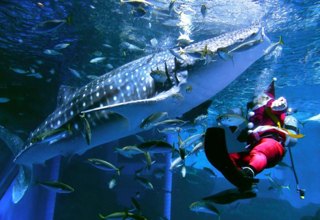 Jedrski poskusi so pomagali pri ugotavljanju starosti kitovcev