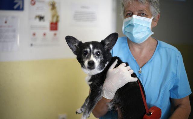 Delo na Kliniki za male živali v času koronavirusa. FOTO: Matej Družnik/Delo