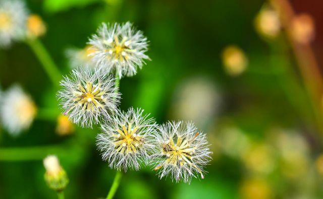 Pomlad je za alergike naporen letni čas. FOTO: Shutterstock