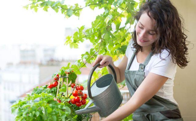 Vrtnine in začimbnice potrebujejo najmanj pet ur sonca na dan. FOTO: Shutterstock