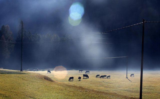 Počasi pa vsi dojemamo, da ima življenje v zakotnih hribovjih svojevrstne prednosti.FOTO: Matej Družnik/Delo