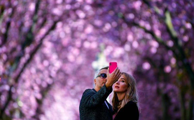 Par se fotografira pod cvetočim češnjevim drevesom v ulici Heerstrasse v nemškem mestu Bonn. Ulica s češnjevimi drevesi v Bonnu je postala znana, ko so fotografi v 80. letih prejšnjega stoletja začeli objavljati fotografije. FOTO: Ina Fassbender/AFP