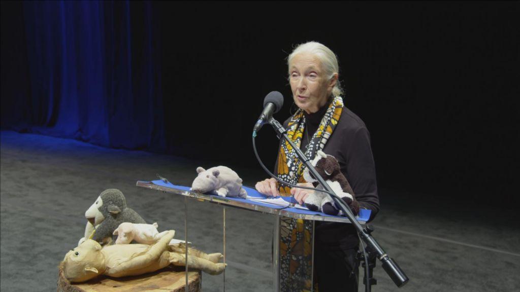 FOTO:Primatologinja Jane Goodall že 60 let s šimpanzi