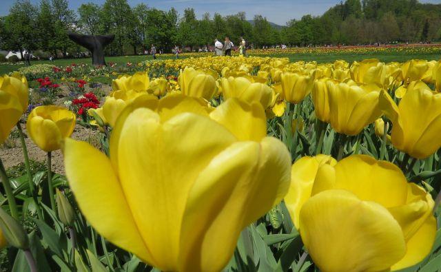 Lani je Arboretum med 15. marcem in 5. majem obiskalo 60.000 ljudi. Tokrat bo obisk precej skromnejši. FOTO: Bojan Rajšek/Delo