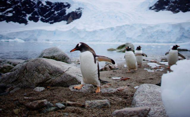 Led se topi, živali izgubljajo dom, sledi pa človeštvo. FOTO: Reuters
