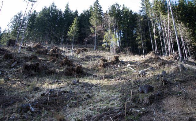Naravne ujme so čedalje bolj pogoste, bolj odporen je raznolik gozd. FOTO: Zavod Za Gozdove