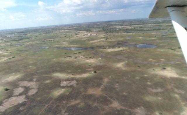 Delta Okavanga v sušni sezoni daje bolj vtis savane kot pa enega največjih celinskih rečnih iztekov.