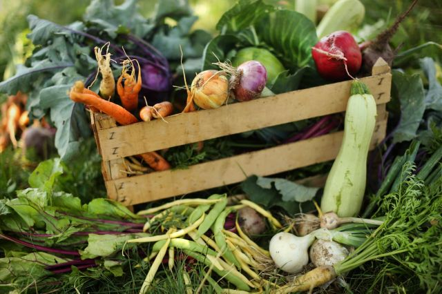 FOTO:Okoli hrane se svet vrti