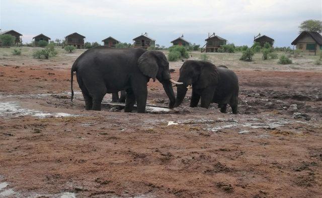 Elephant sands je v sušni dobi le skromno napajališče, ki ga polnijo lastniki.