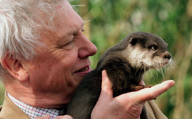 Najbrž ni človeka, ki bi v življenju videl več različnih živali kot David Attenborough. Foto Reuters