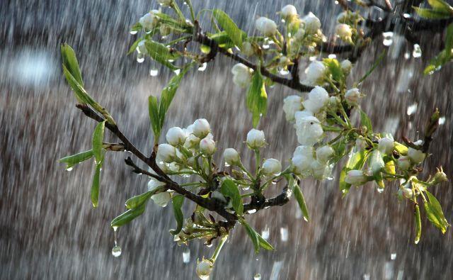 Letošnji godovi sv. Pankracija, Servacija in Bonifacija bodo minili v slabem vremenu z nižjimi temperaturami. Pozebe vseeno ni pričakovati. FOTO: Shutterstock