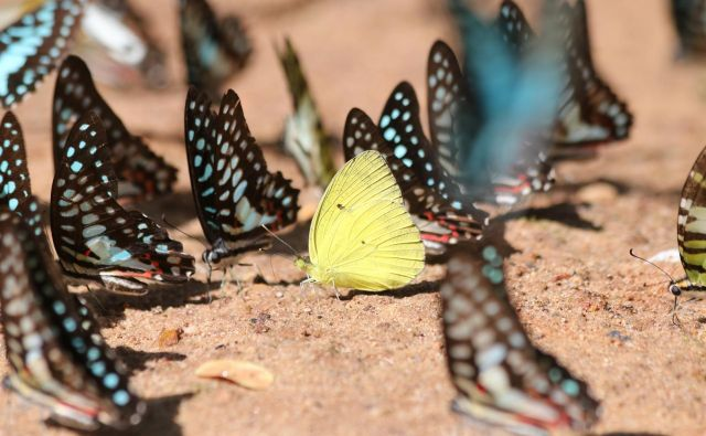 Speči metulji so postopno in pregledno odstiranje skrajno samoniklega pesniškega opusa. Foto Shutterstock