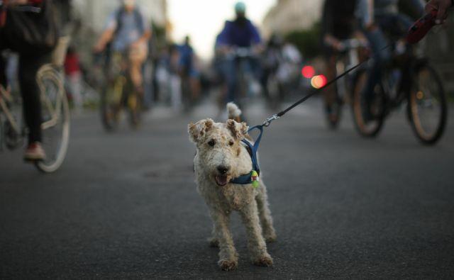 Kolesarji in pasja zverinica Foto: Jure Eržen/Delo