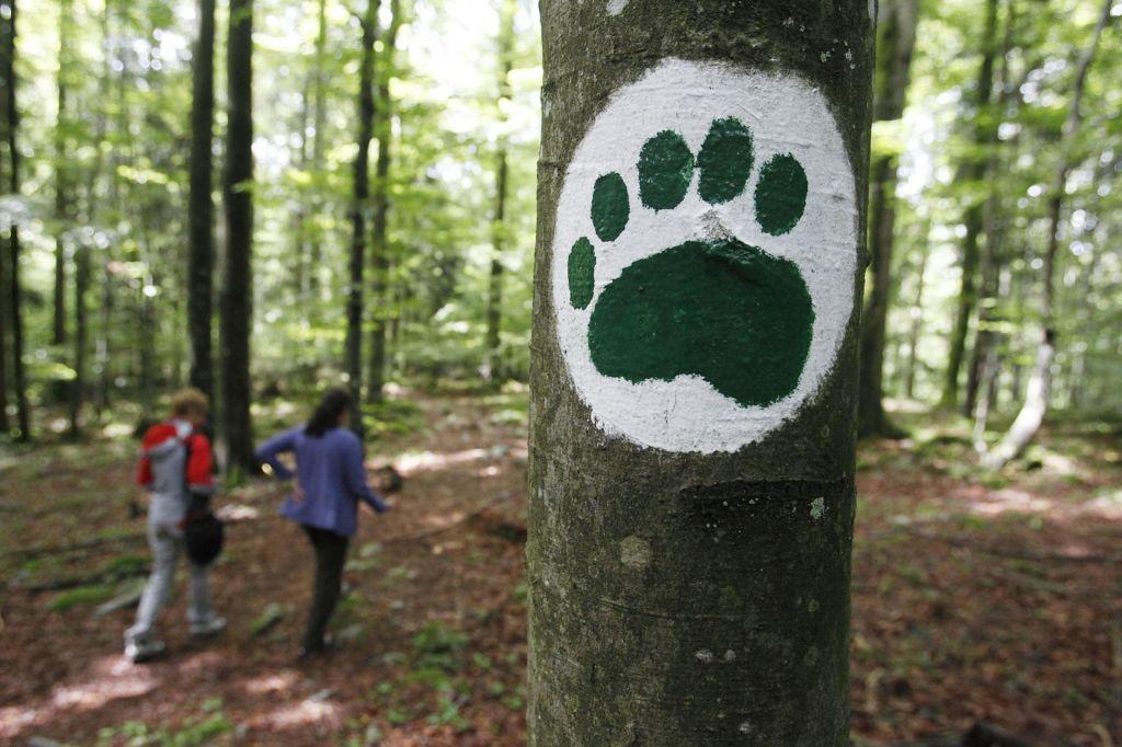 Medvedi do zdaj povzročili manj škod kot lani, volkovi več